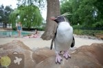 Penguin Zoo at The London Zoo