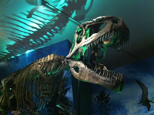 Royal Ontario Museum - Giganotosaurus