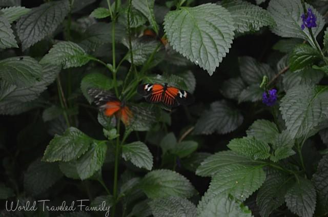 Niagara Butterfly Conservatory - butterflies fluttering around