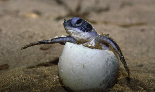 turtle conservation expeditions La Paz