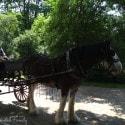 Black Creek Pioneer Village - horse drawn carriage
