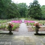 Edsel & Eleanor Ford House - rose garden