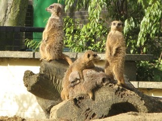 5 Destinations around London That Are Perfect to See With Your Kids: Battersea Park Children's Zoo