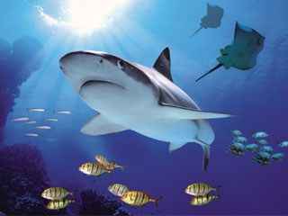 5 Destinations around London That Are Perfect to See With Your Kids: Sea Life London Aquarium