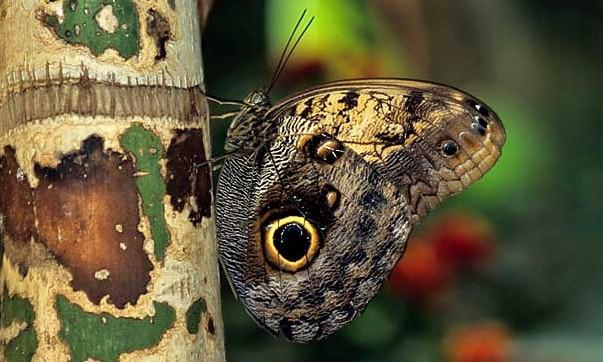 San Diego Zoo Safari Park's Popular Butterfly Jungle Is Back!