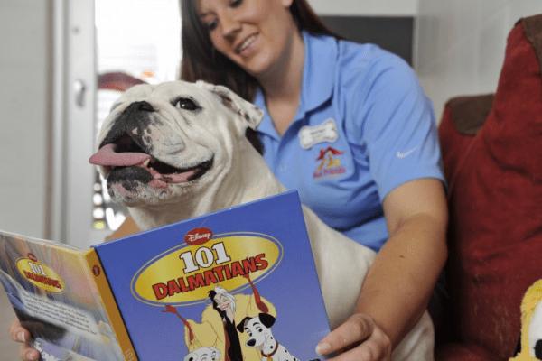 6 Ways Dogs Can Enjoy Walt Disney World!
