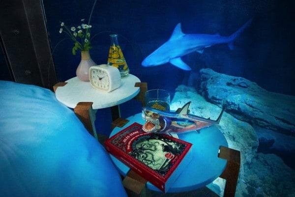 AIRBNB Aquarium shark sleepover.
