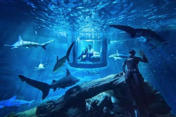AIRBNB Aquarium shark sleepover. - Paris